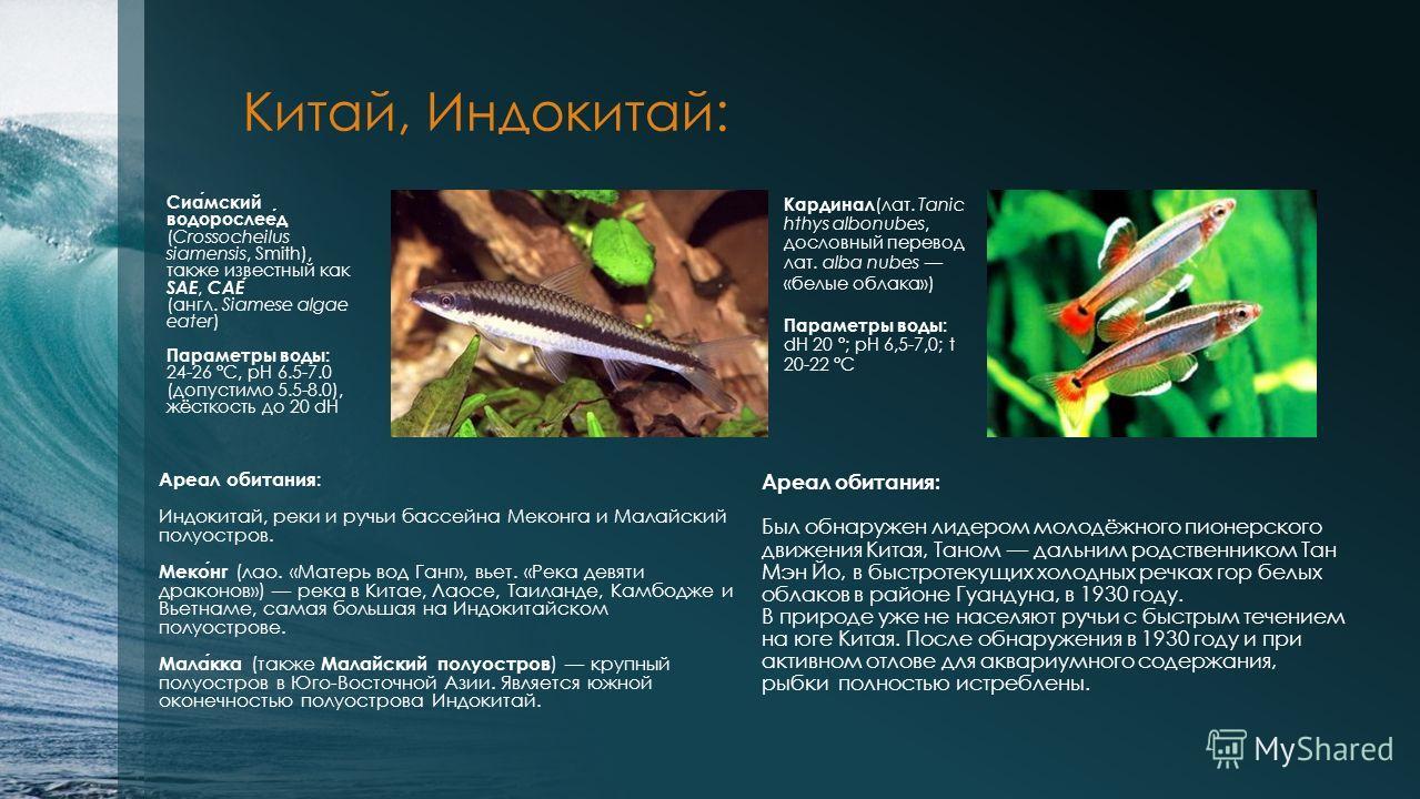 Китай, Индокитай: Сиамский водорослеед (Crossocheilus siamensis, Smith), также известный как SAE, САЕ (англ. Siamese algae eater) Параметры воды: 24-26 °C, pH 6.5-7.0 (допустимо 5.5-8.0), жёсткость до 20 dH Кардинал (лат. Tanic hthys albonubes, досло