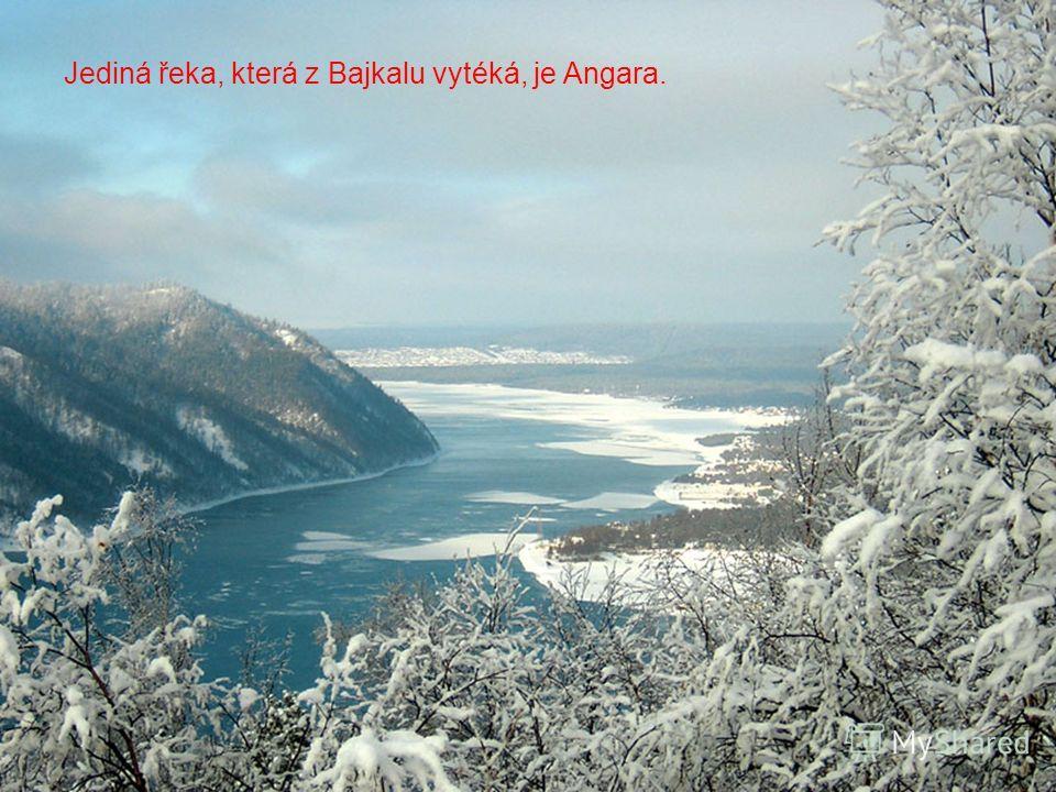 Do Bajkalu se vlévá na 336 stálých řek a potoků. Největší mezi nimi je řeka Selenga.