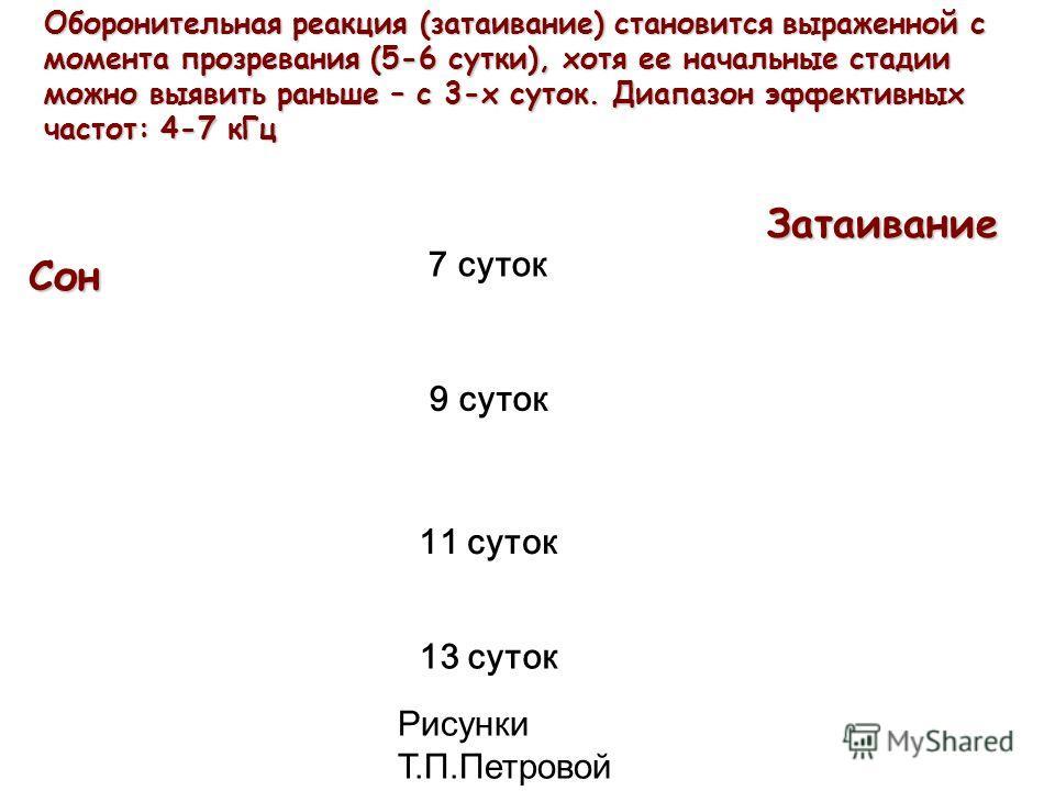 Сон Оборонительная реакция (затаивание) становится выраженной с момента прозревания (5-6 сутки), хотя ее начальные стадии можно выявить раньше – с 3-х суток. Диапазон эффективных частот: 4-7 кГц 7 суток 9 суток 11 суток 13 суток Затаивание Рисунки Т.