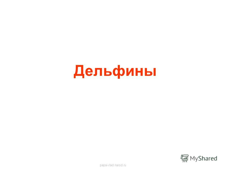 Дельфины papa-vlad.narod.ru
