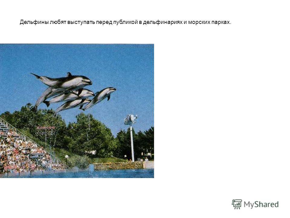 Дельфины любят выступать перед публикой в дельфинариях и морских парках.
