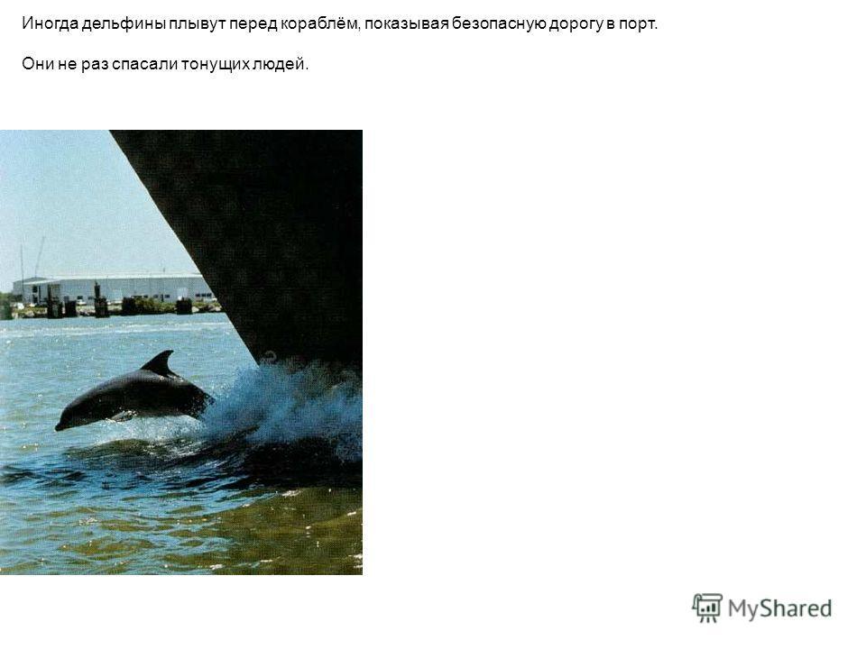 Иногда дельфины плывут перед кораблём, показывая безопасную дорогу в порт. Они не раз спасали тонущих людей. Иногда дельфины плывут перед кораблём, показывая безопасную дорогу в порт. Они не раз спасали тонущих людей.