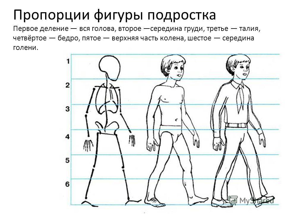 Пропорции фигуры подростка Первое деление вся голова, второе середина груди, третье талия, четвёртое бедро, пятое верхняя часть колена, шестое середина голени.