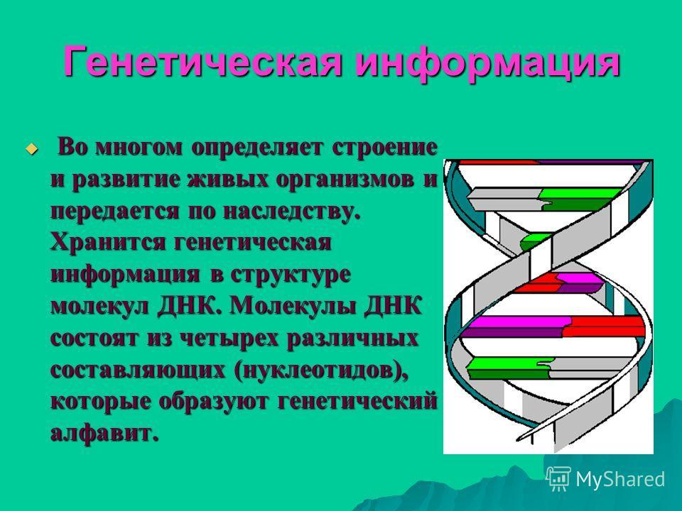 Генетическая информация Во многом определяет строение и развитие живых организмов и передается по наследству. Хранится генетическая информация в структуре молекул ДНК. Молекулы ДНК состоят из четырех различных составляющих (нуклеотидов), которые обра