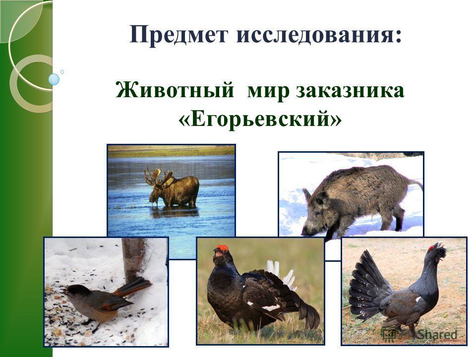 Предмет исследования: Животный мир заказника «Егорьевский»