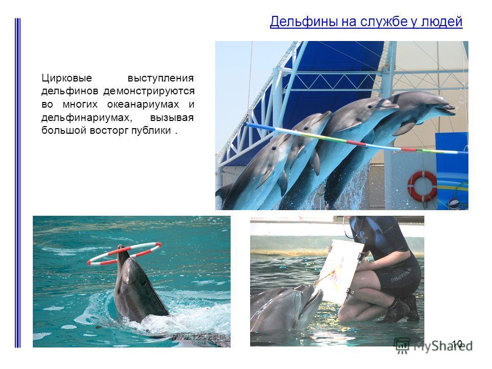 10 Дельфины на службе у людей Цирковые выступления дельфинов демонстрируются во многих океанариумах и дельфинариумах, вызывая большой восторг публики.
