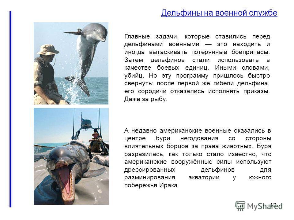 12 Дельфины на военной службе Главные задачи, которые ставились перед дельфинами военными это находить и иногда вытаскивать потерянные боеприпасы. Затем дельфинов стали использовать в качестве боевых единиц. Иными словами, убийц. Но эту программу при