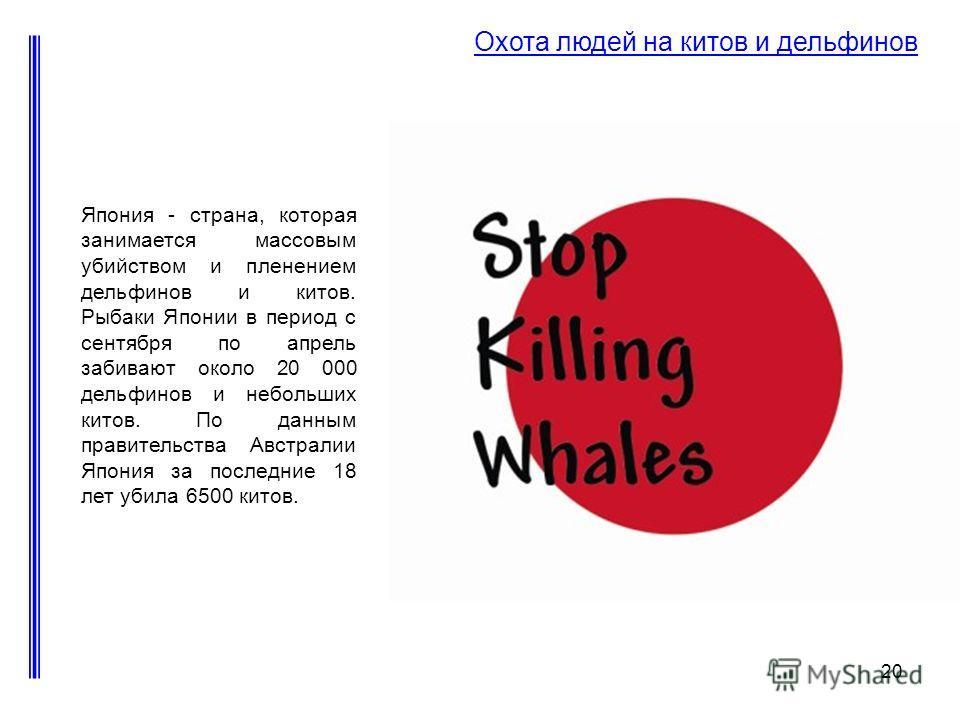 20 Охота людей на китов и дельфинов Япония - страна, которая занимается массовым убийством и пленением дельфинов и китов. Рыбаки Японии в период с сентября по апрель забивают около 20 000 дельфинов и небольших китов. По данным правительства Австралии