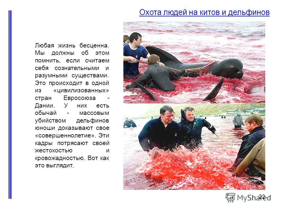 22 Охота людей на китов и дельфинов Любая жизнь бесценна. Мы должны об этом помнить, если считаем себя сознательными и разумными существами. Это происходит в одной из «цивилизованных» стран Евросоюза - Дании. У них есть обычай - массовым убийством де