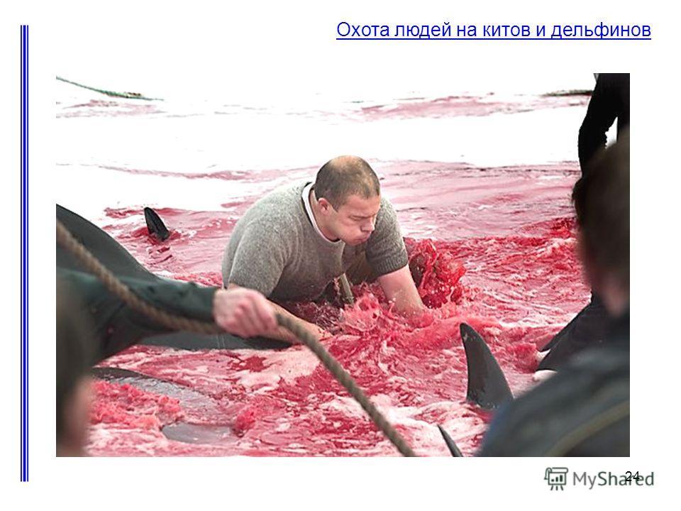 24 Охота людей на китов и дельфинов