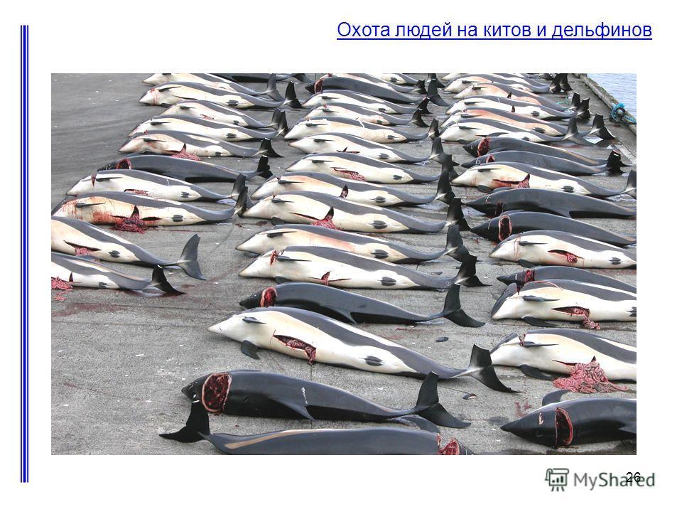 26 Охота людей на китов и дельфинов