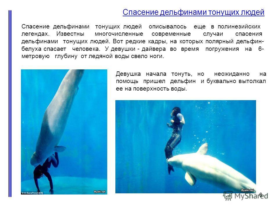 6 Девушка начала тонуть, но неожиданно на помощь пришел дельфин и буквально вытолкал ее на поверхность воды. Спасение дельфинами тонущих людей Спасение дельфинами тонущих людей описывалось еще в полинезийских легендах. Известны многочисленные совреме