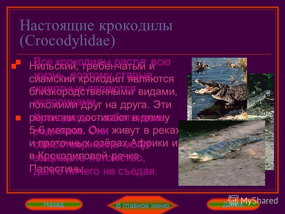 Настоящие крокодилы (Crocodylidae) В главное меню Далее Между гавиалами и настоящими крокодилами есть переходная форма – узкорылый крокодил Хотя есть и гавиаловый крокодил, показанный на рисунке. Он очень похож на большого гавиала. Назад Нильский, гр