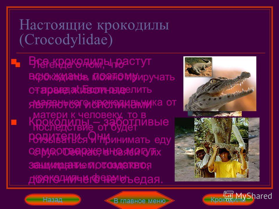 Настоящие крокодилы (Crocodylidae) В главное меню ДалееНазад Нильский, гребенчатый и сиамский крокодил являются близкородственными видами, похожими друг на друга. Эти рептилии достигают в длину 5-6 метров. Они живут в реках и проточных озёрах Африки