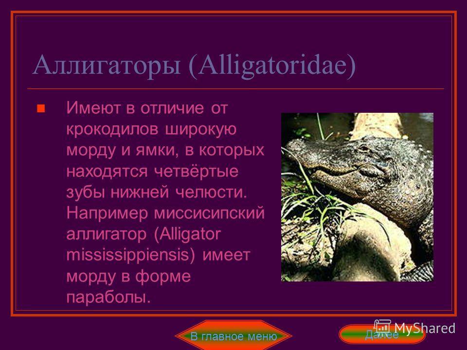 Гавиалы (Gavialidae) В главное меню В это семейство входят один вид – гигантский гавиал (Gavialis gangeticus). У него необычно узкое рыло с 28 зубов в верхней челюсти и 26 зубов в нижней. Так же у гавиалов брюхо не покрыто костными пластинами. Ещё он