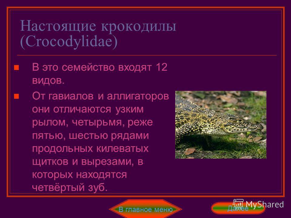 Отряд Крокодилы В главное меню ДалееНазад перегородкой. Желудок прекрасно развит. Это подтверждается тем, что в нём перевариваются рога и копыта, а со временем может и Fe Этих признаков очень много, поэтому все перечислять не стоит. Существует 24 вид