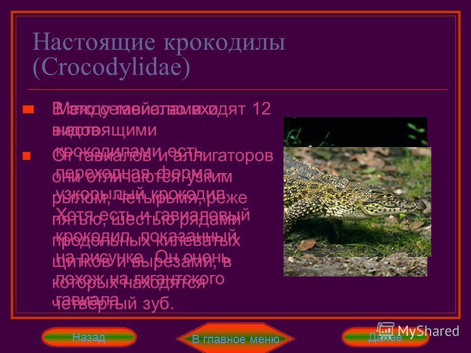 Настоящие крокодилы (Crocodylidae) В главное меню Далее В это семейство входят 12 видов. От гавиалов и аллигаторов они отличаются узким рылом, четырьмя, реже пятью, шестью рядами продольных килеватых щитков и вырезами, в которых находятся четвёртый з
