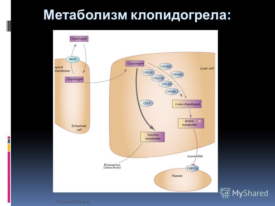 Метаболизм клопидогрела: PharmGKB.org