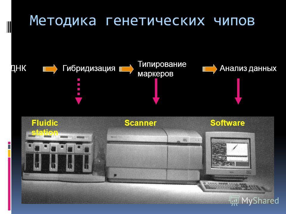 Гибридизация Типирование маркеров Анализ данныхДНК Fluidic station ScannerSoftware Методика генетических чипов