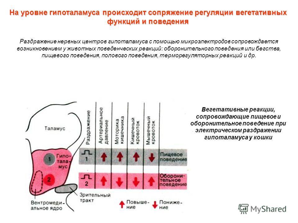 Вегетативные реакции, сопровождающие пищевое и оборонительное поведение при электрическом раздражении гипоталамуса у кошки Раздражение нервных центров гипоталамуса с помощью микроэлектродов сопровождается возникновением у животных поведенческих реакц