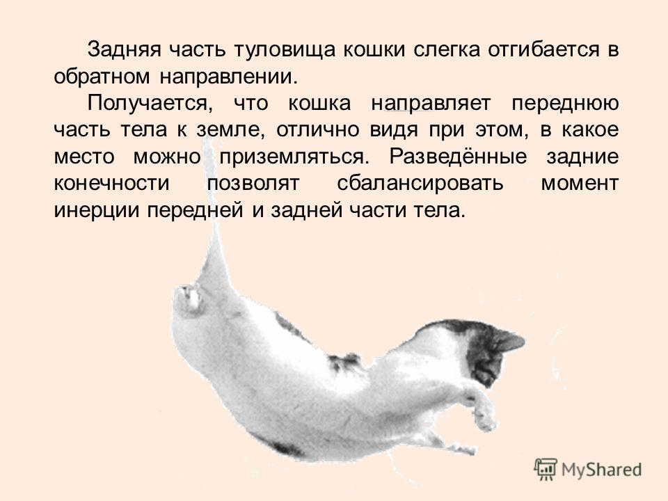 Задняя часть туловища кошки слегка отгибается в обратном направлении. Получается, что кошка направляет переднюю часть тела к земле, отлично видя при этом, в какое место можно приземляться. Разведённые задние конечности позволят сбалансировать момент