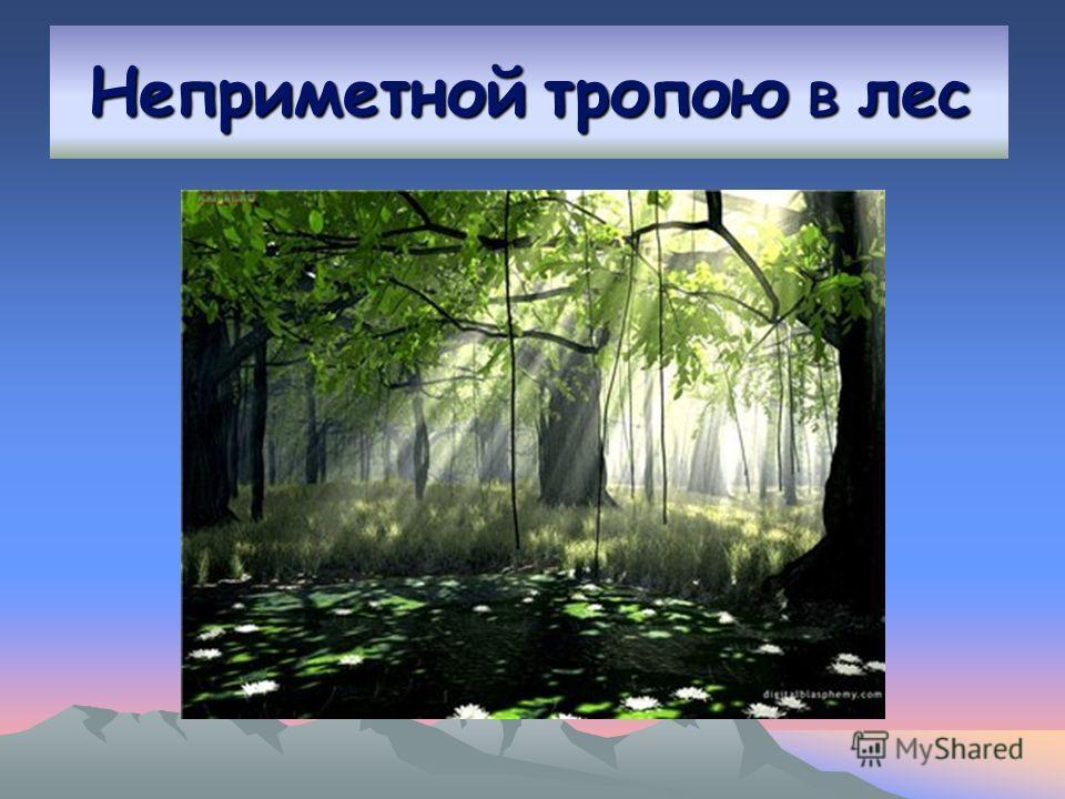 Неприметной тропою в лес
