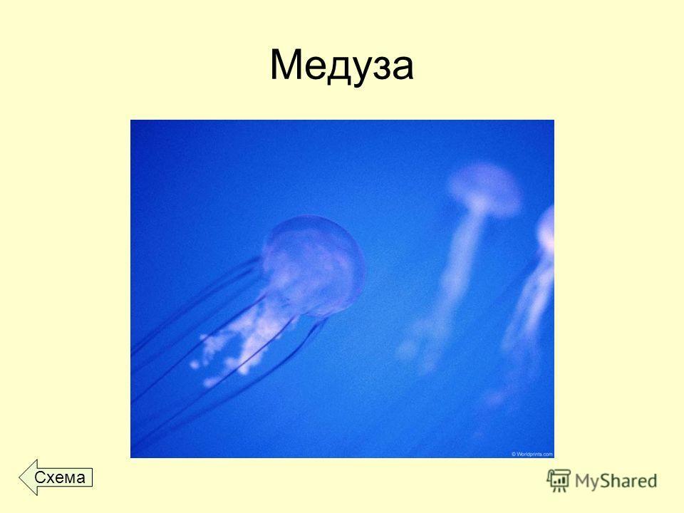Медуза Схема