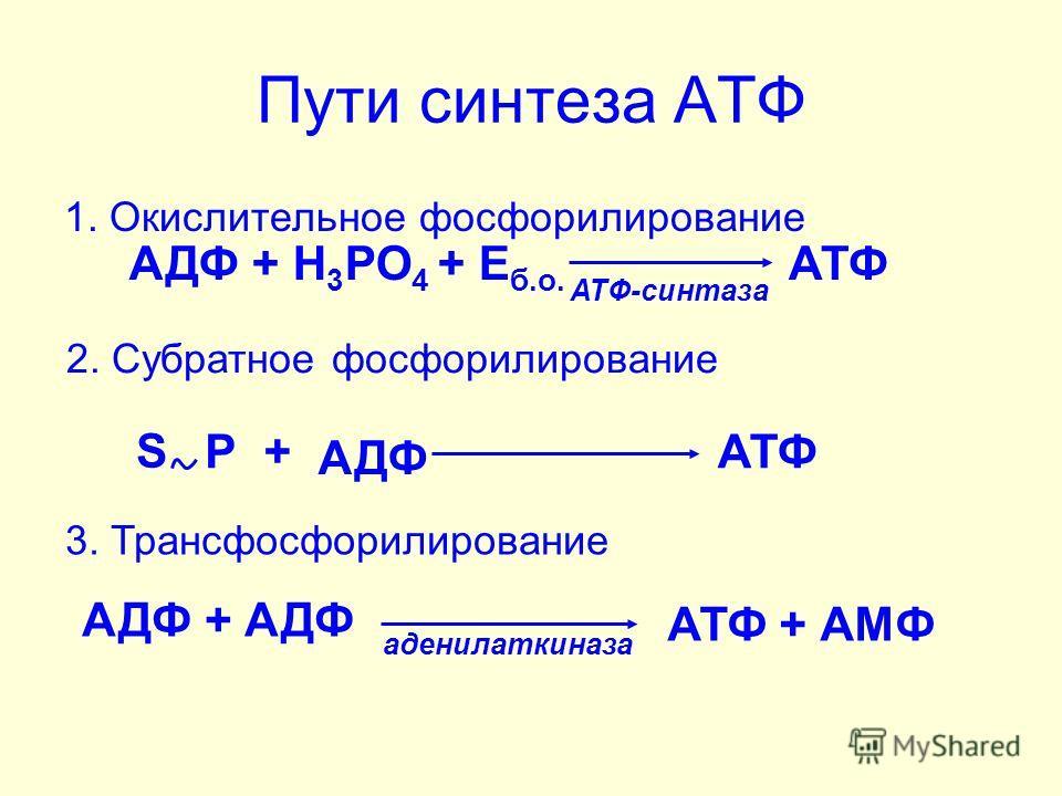 Пути синтеза АТФ 1. Окислительное фосфорилирование АДФ + Н 3 РО 4 S Р+ АДФ АТФ 2. Субратное фосфорилирование АДФ + Н 3 РО 4 + Е б.о. АТФ АТФ-синтаза аденилаткиназа 3. Трансфосфорилирование АДФ + АДФ АТФ + АМФ