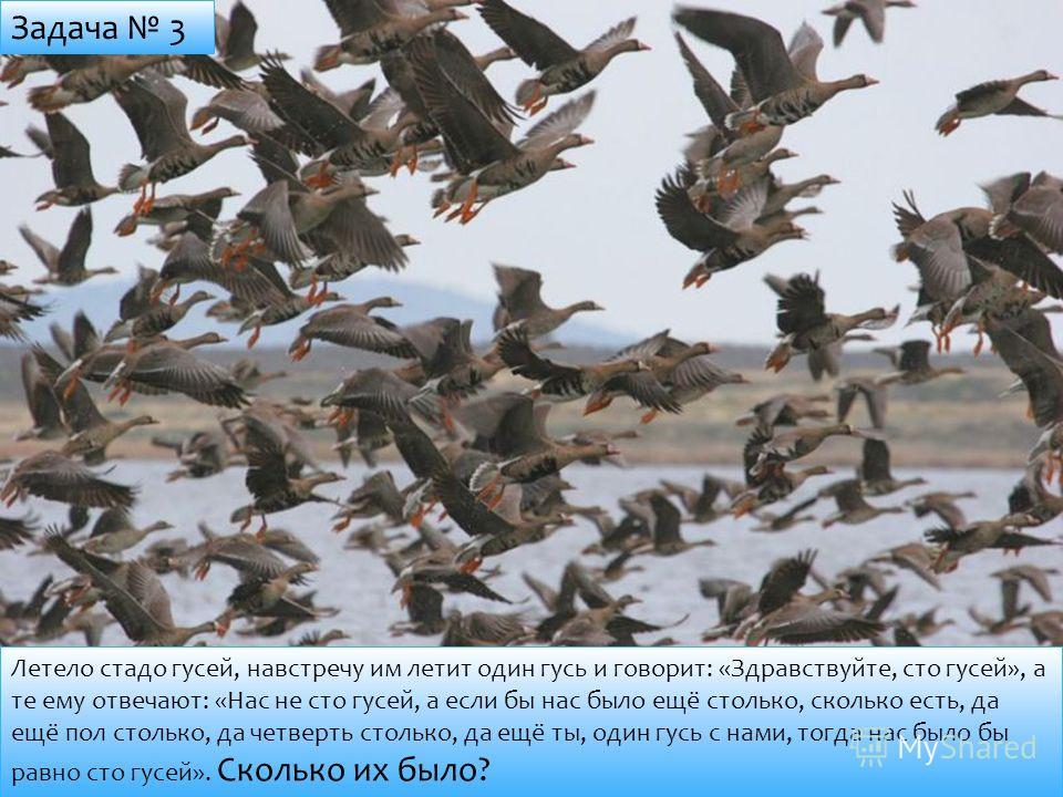 Летело стадо гусей, навстречу им летит один гусь и говорит: «Здравствуйте, сто гусей», а те ему отвечают: «Нас не сто гусей, а если бы нас было ещё столько, сколько есть, да ещё пол столько, да четверть столько, да ещё ты, один гусь с нами, тогда нас
