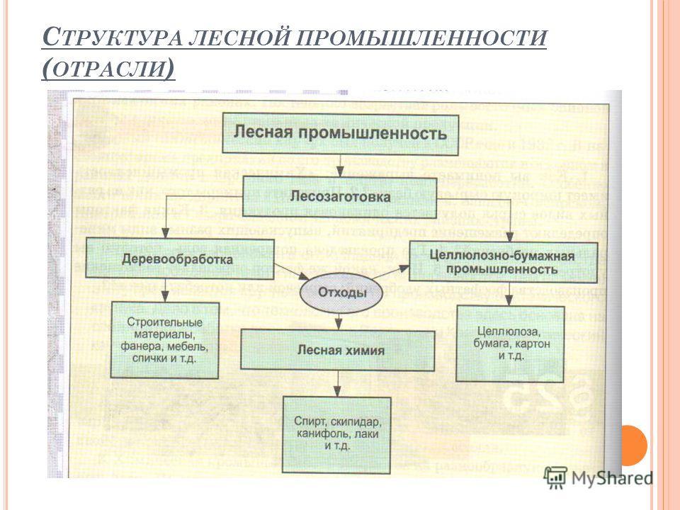 С ТРУКТУРА ЛЕСНОЙ ПРОМЫШЛЕННОСТИ ( ОТРАСЛИ )
