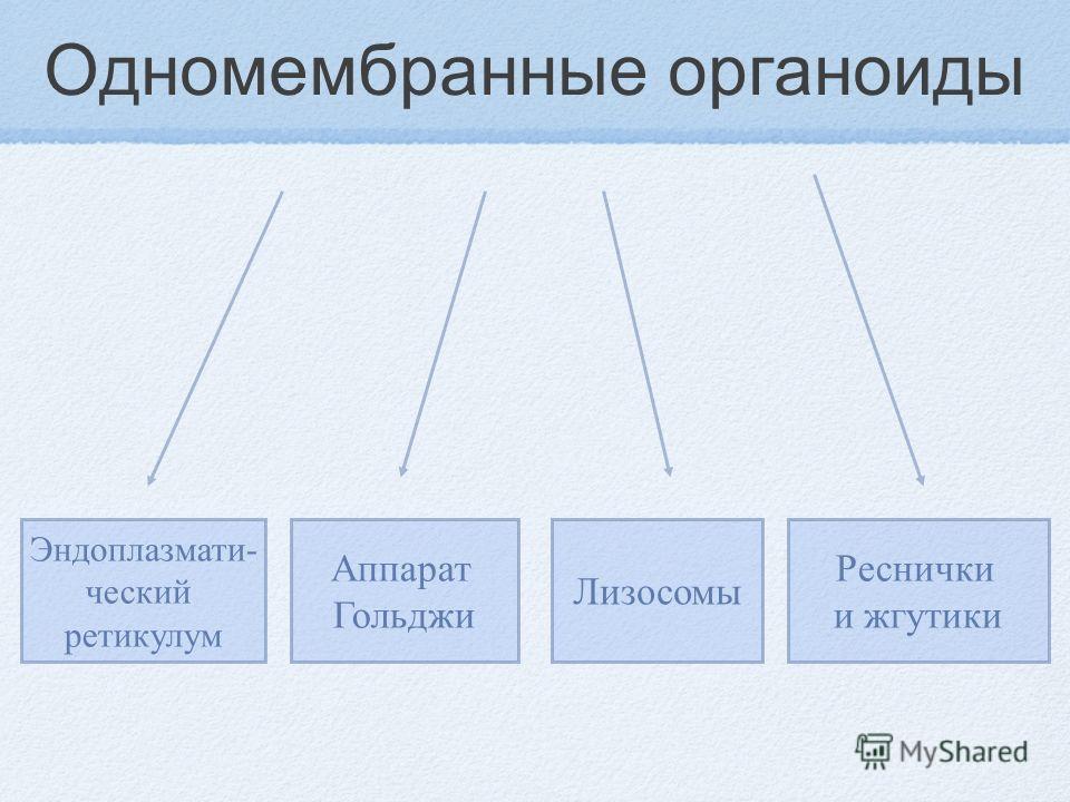 Одномембранные органоиды Эндоплазмати- ческий ретикулум Аппарат Гольджи Лизосомы Реснички и жгутики