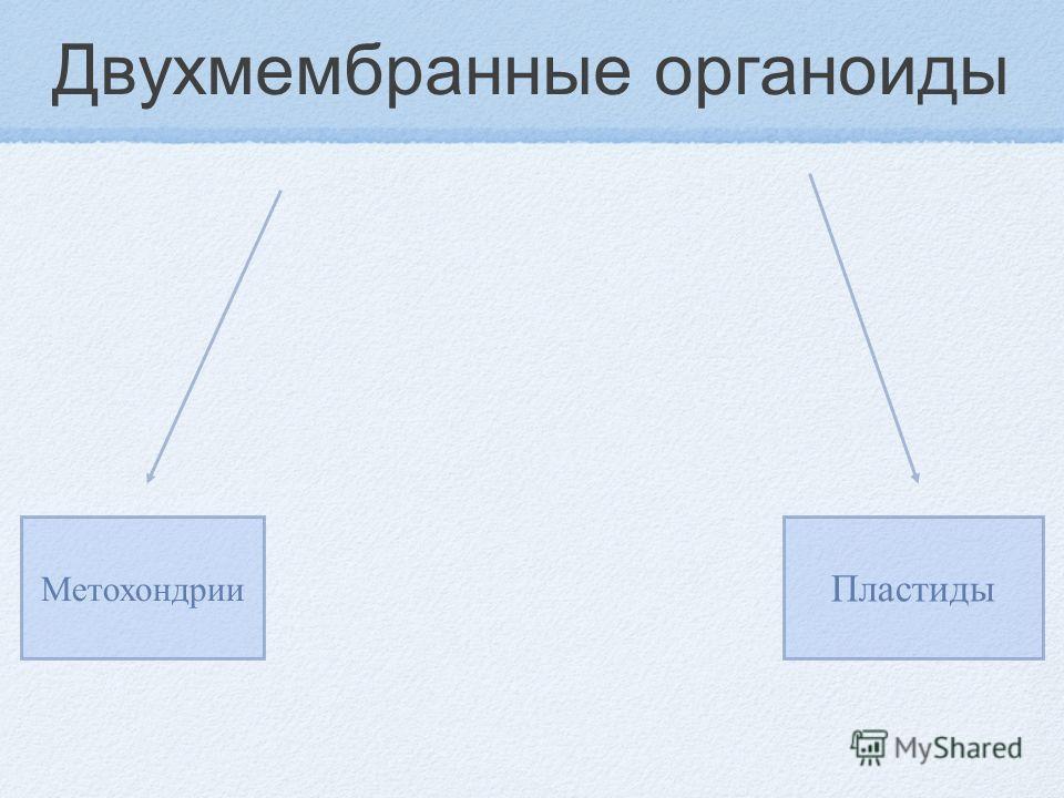 Двухмембранные органоиды Метохондрии Пластиды