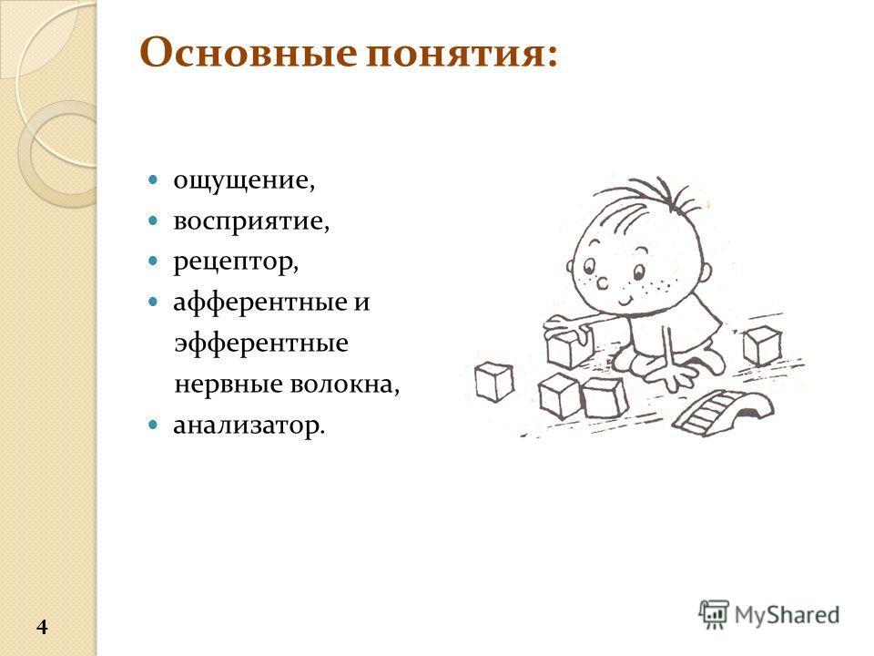 Основные понятия: ощущение, восприятие, рецептор, афферентные и эфферентные нервные волокна, анализатор. 4
