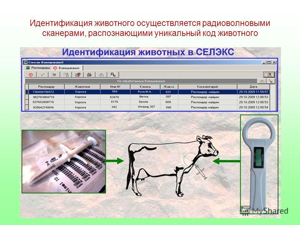 Идентификация животного осуществляется радиоволновыми сканерами, распознающими уникальный код животного