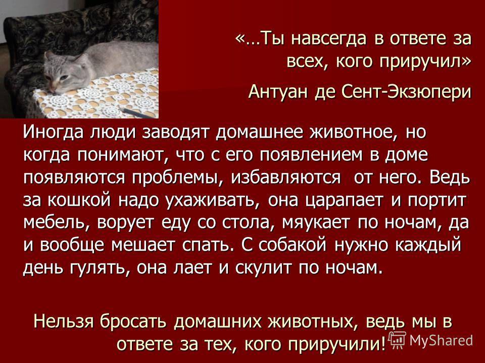 «…Ты навсегда в ответе за всех, кого приручил» Антуан де Сент-Экзюпери Иногда люди заводят домашнее животное, но когда понимают, что с его появлением в доме появляются проблемы, избавляются от него. Ведь за кошкой надо ухаживать, она царапает и порти