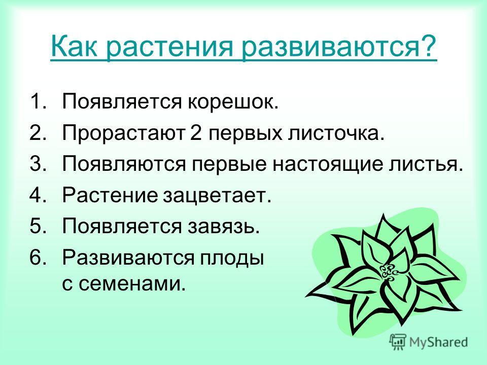 Как растения развиваются? 1.Появляется корешок. 2.Прорастают 2 первых листочка. 3.Появляются первые настоящие листья. 4.Растение зацветает. 5.Появляется завязь. 6.Развиваются плоды с семенами.