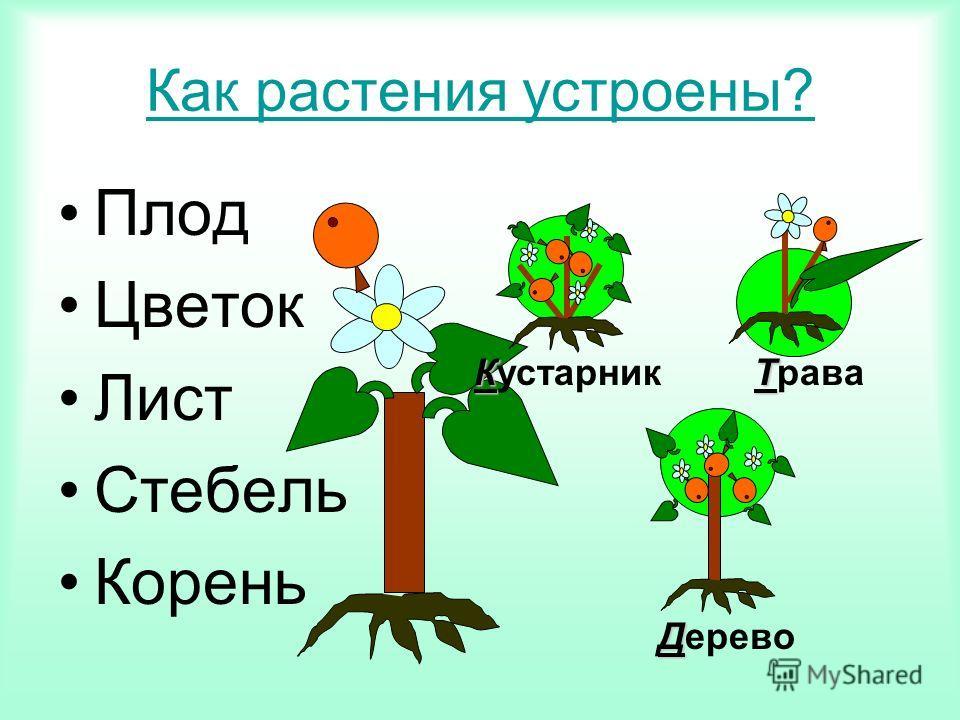 Как растения устроены? Плод Цветок Лист Стебель Корень Д Дерево К Кустарник Т Трава