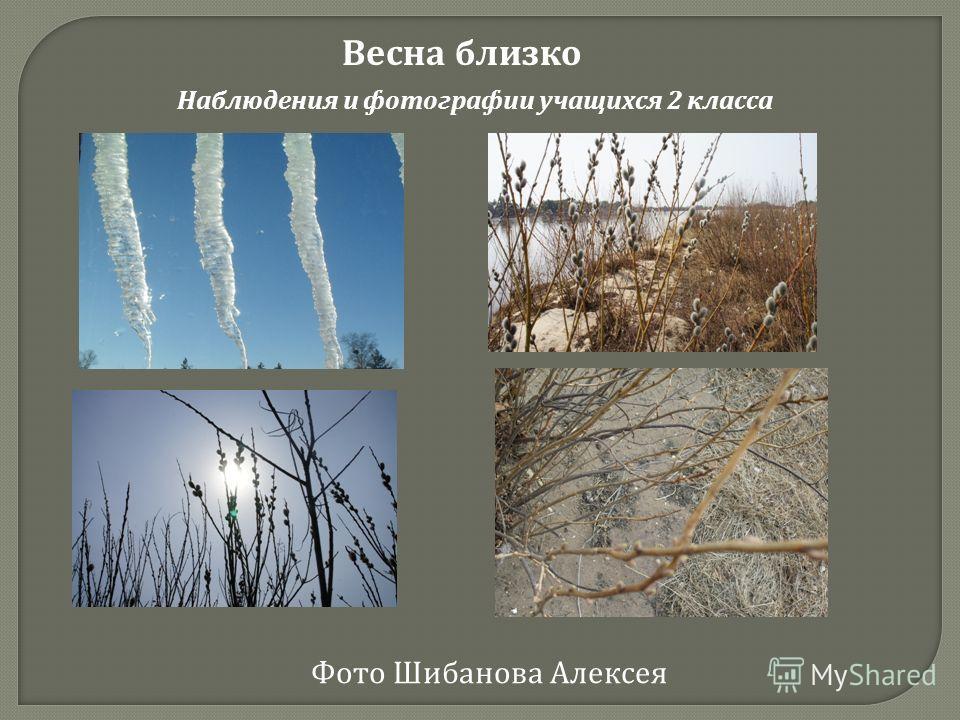 Весна близко Наблюдения и фотографии учащихся 2 класса Фото Шибанова Алексея