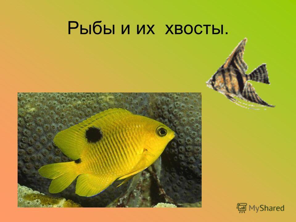 Рыбы и их хвосты.