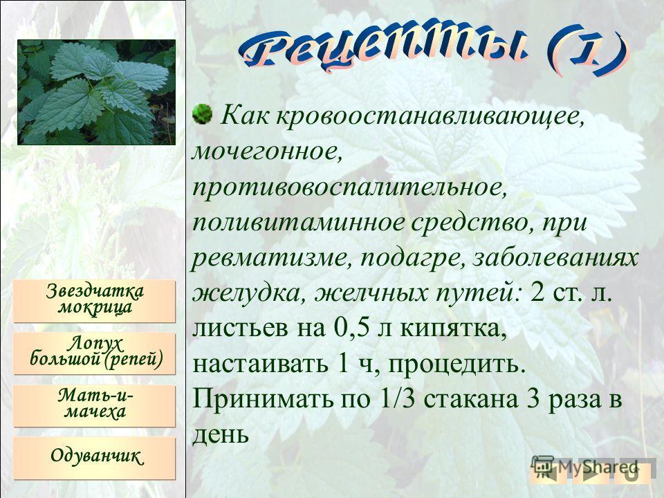 Как кровоостанавливающее, мочегонное, противовоспалительное, поливитаминное средство, при ревматизме, подагре, заболеваниях желудка, желчных путей: 2 ст. л. листьев на 0,5 л кипятка, настаивать 1 ч, процедить. Принимать по 1/3 стакана 3 раза в день З