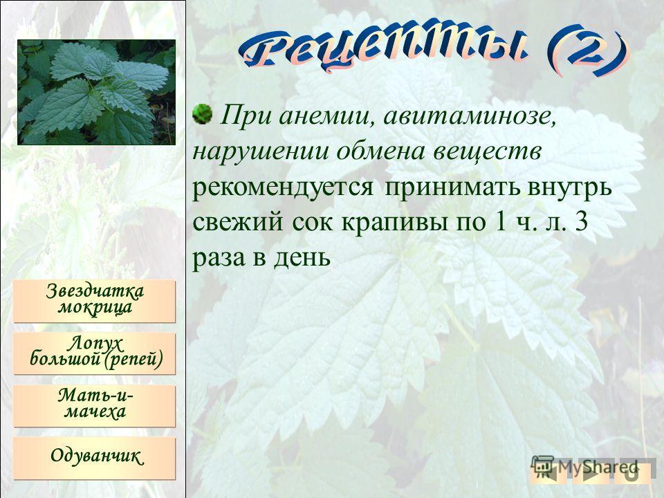 При анемии, авитаминозе, нарушении обмена веществ рекомендуется принимать внутрь свежий сок крапивы по 1 ч. л. 3 раза в день Звездчатка мокрица Лопух большой (репей) Мать-и- мачеха Одуванчик