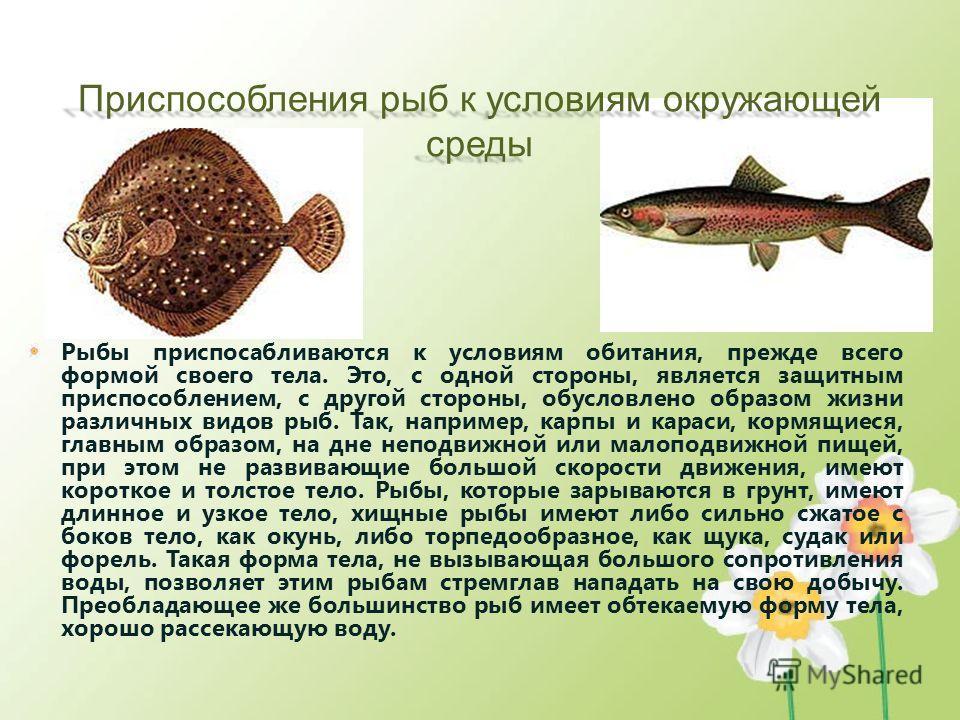 Приспособления рыб к условиям окружающей среды Рыбы приспосабливаются к условиям обитания, прежде всего формой своего тела. Это, с одной стороны, является защитным приспособлением, с другой стороны, обусловлено образом жизни различных видов рыб. Так,