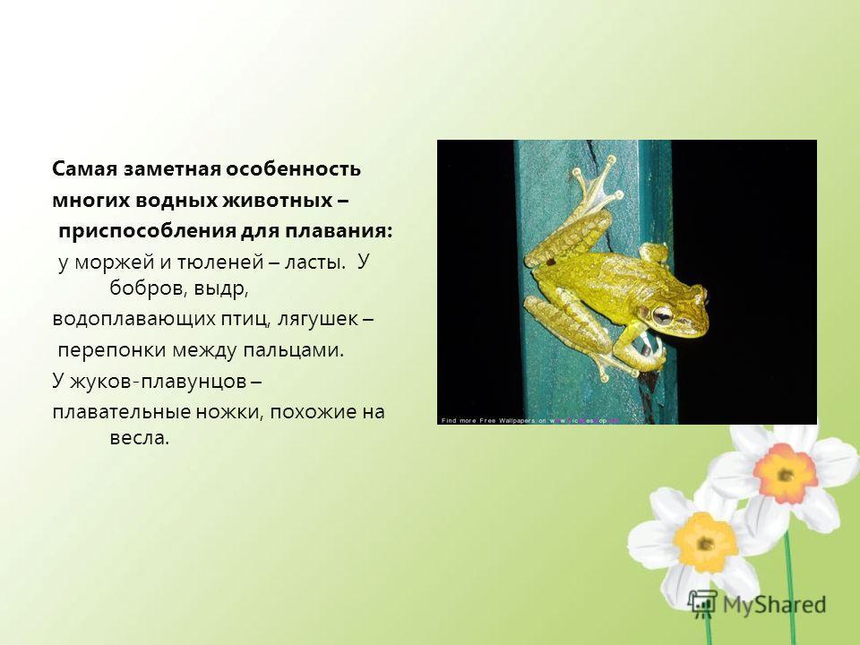 Самая заметная особенность многих водных животных – приспособления для плавания: у моржей и тюленей – ласты. У бобров, выдр, водоплавающих птиц, лягушек – перепонки между пальцами. У жуков-плавунцов – плавательные ножки, похожие на весла.