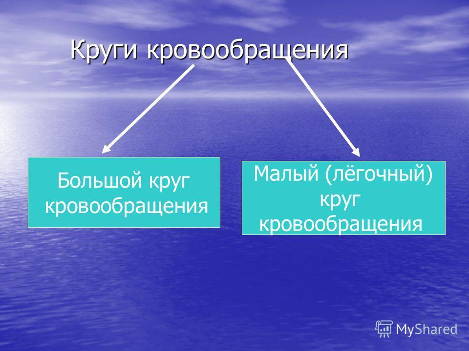 Круги кровообращения Большой круг кровообращения Малый (лёгочный) круг кровообращения