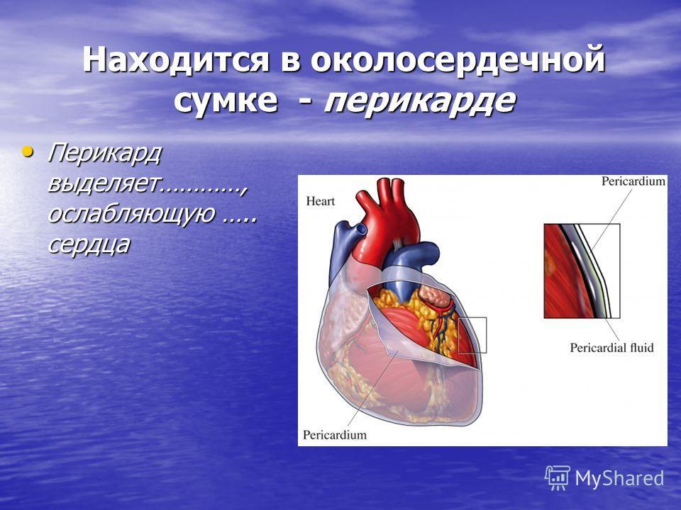 Находится в околосердечной сумке - перикарде Перикард выделяет…………, ослабляющую ….. сердца Перикард выделяет…………, ослабляющую ….. сердца