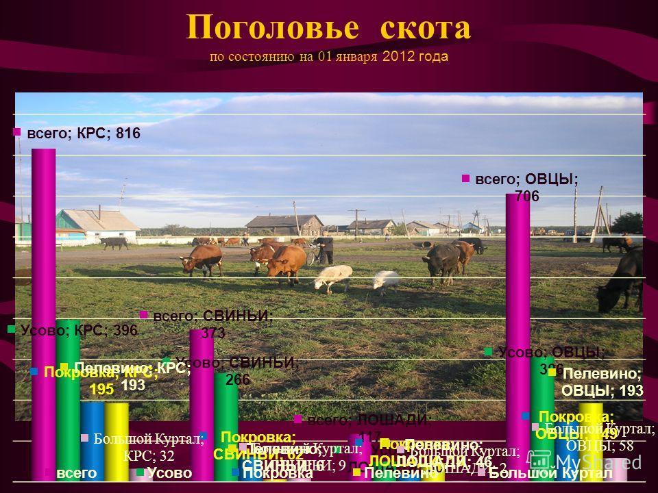 Поголовье скота по состоянию на 01 января 2012 года