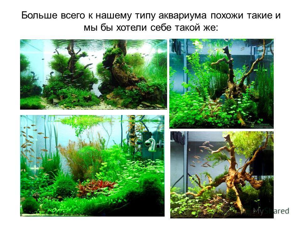 Больше всего к нашему типу аквариума похожи такие и мы бы хотели себе такой же: