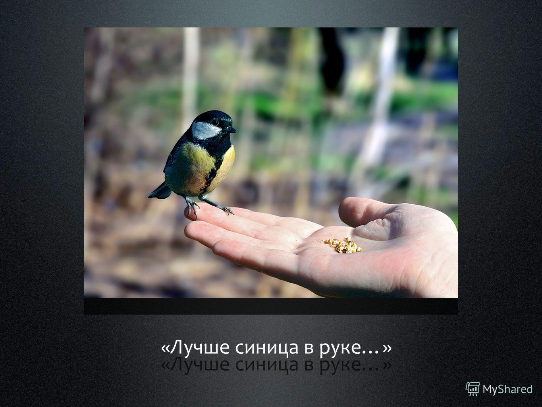 «Лучше синица в руке…»