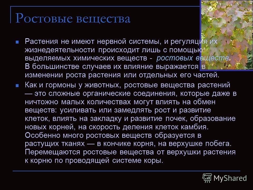 Ростовые вещества Растения не имеют нервной системы, и регуляция их жизнедеятельности происходит лишь с помощью выделяемых химических веществ - ростовых веществ. В большинстве случаев их влияние выражается в изменении роста растения или отдельных его