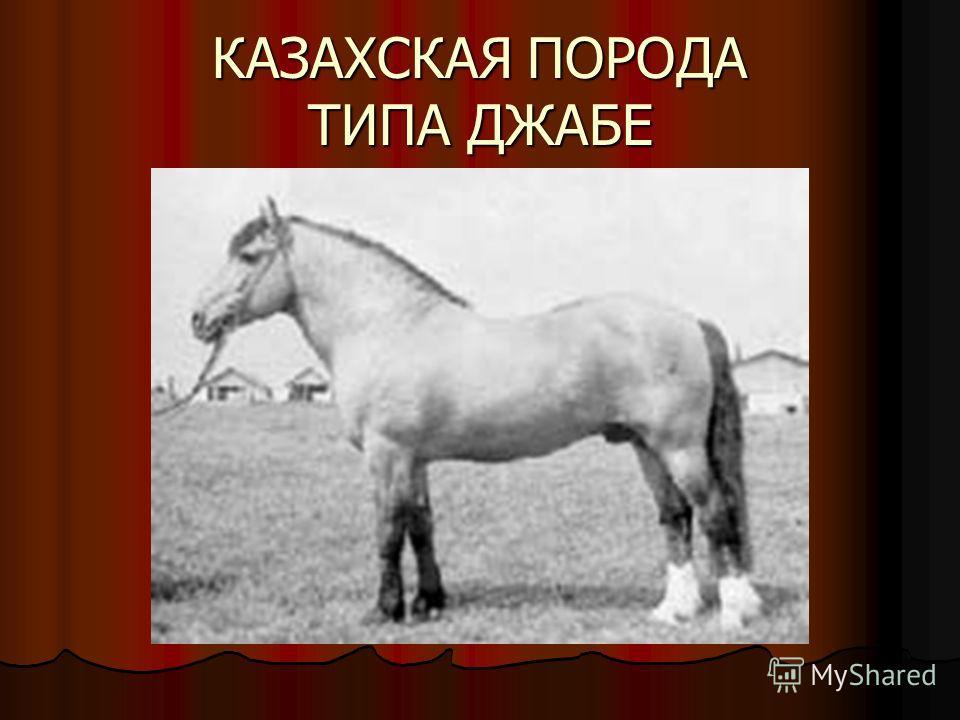 КАЗАХСКАЯ ПОРОДА ТИПА ДЖАБЕ